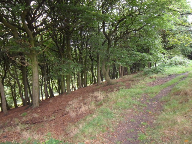 Owlers Wood