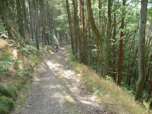 Curving woodland path above Snailbeach