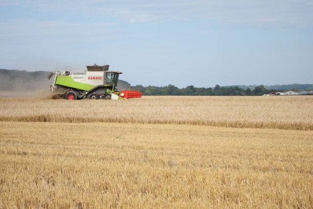 Barley harvesting by White Hill