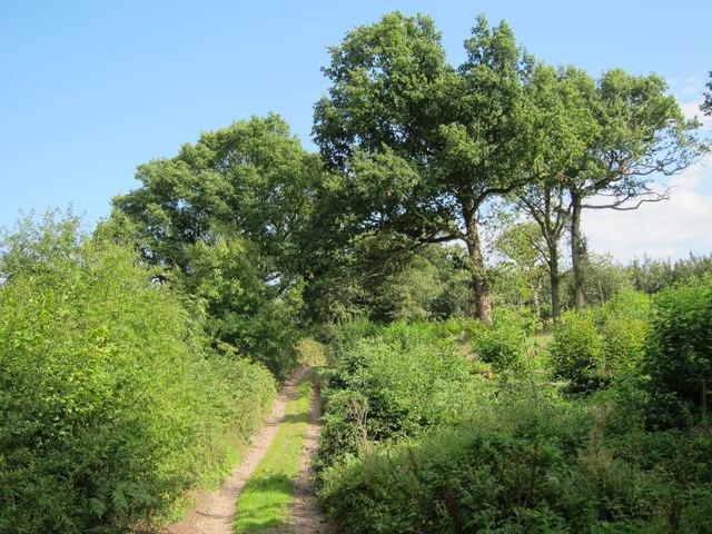 Track through Hurst Wood