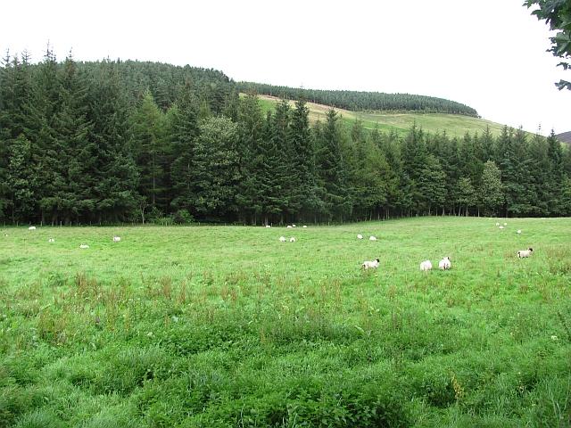Field, Baitlaws