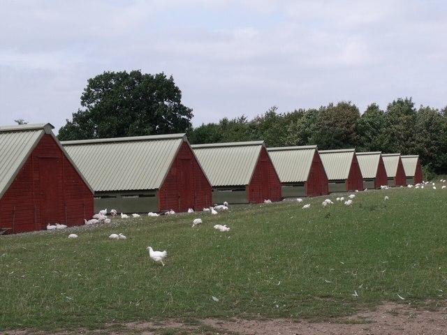 Chicken Farm off the A46