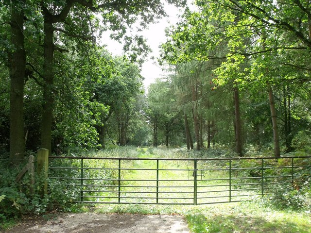 Gated Track into Gilbert's Wood, off Wood Lane