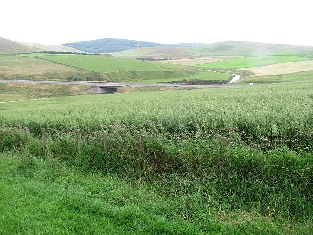 A field of oats, Maidencotts
