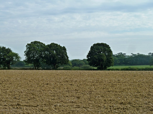 Trees in the hedgerow