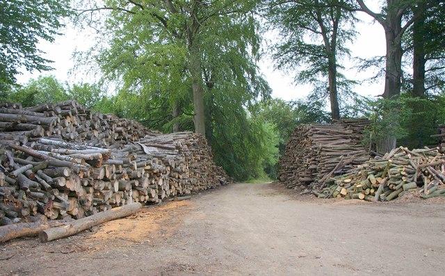Woodpiles at Wellhill Farm