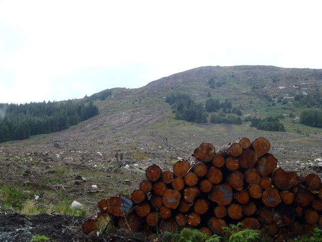 Timber awaits collection below Black Craig