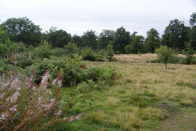 A quiet corner of Dunham Park
