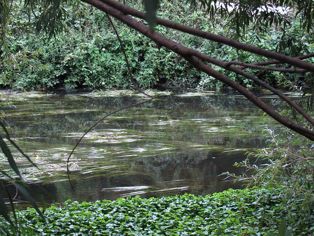 Weeds in the Wandle