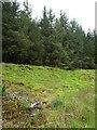 NX5866 : Mossy mounds alongside a Forest Track by Bob Peace