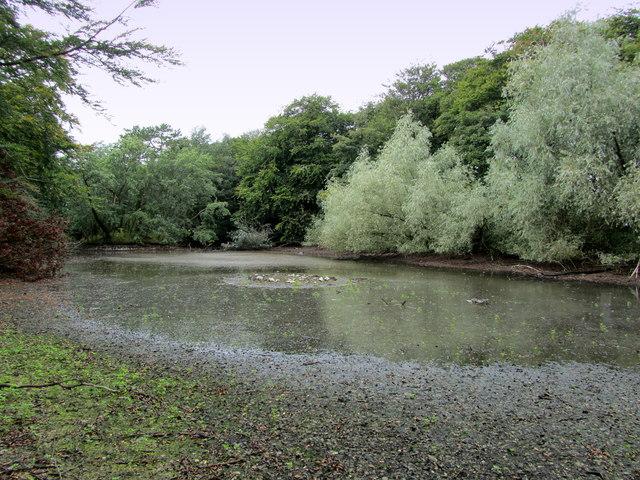 Pond by Fluke Hall Lane