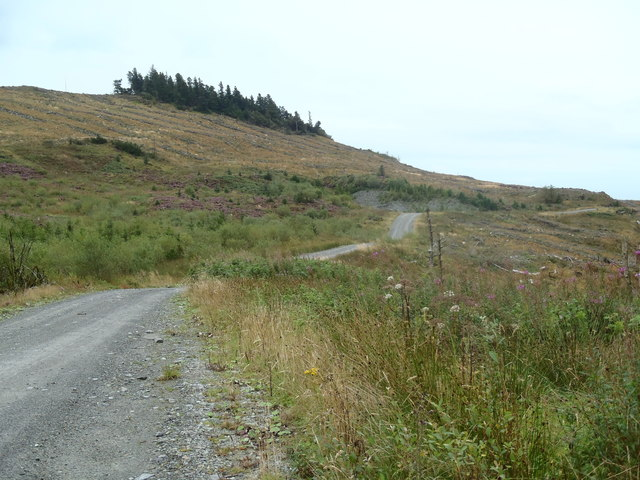 Forest track winds below the slopes of White Top of Culreoch