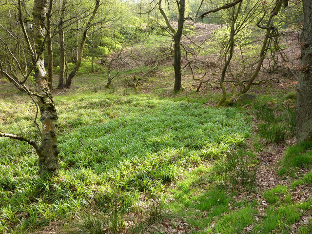 A boggy area in Broad Head Clough