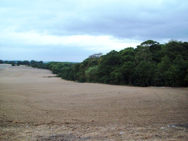 The Fringe of Copley Wood