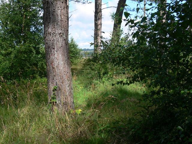 Northern edge of Newborough Forest