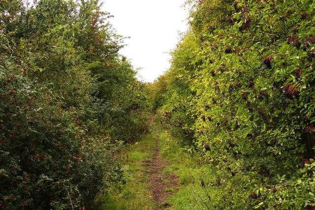 Bridleway between the hedgerows