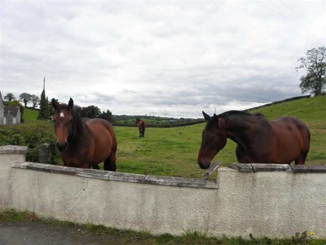 Horses, Killaney