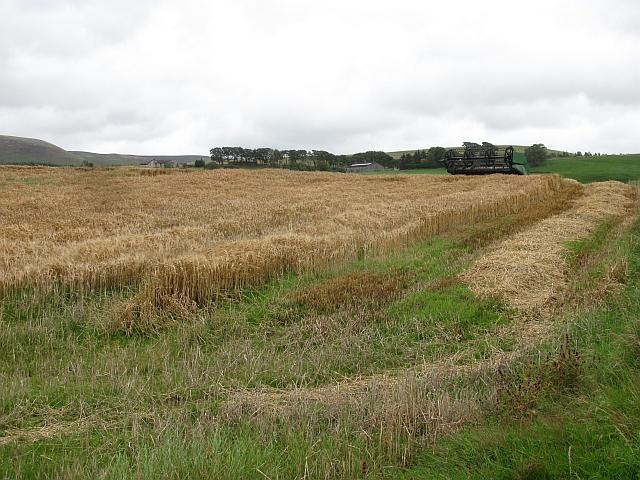 Harvest, Skirling Craigs