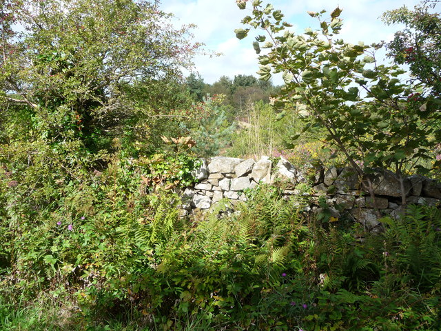 View over the dry stone wall into scrub