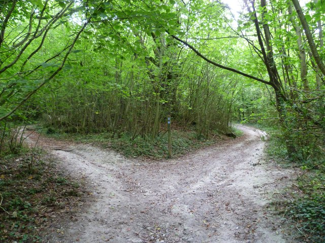 Bridleway junction on the downs near Charlton Court