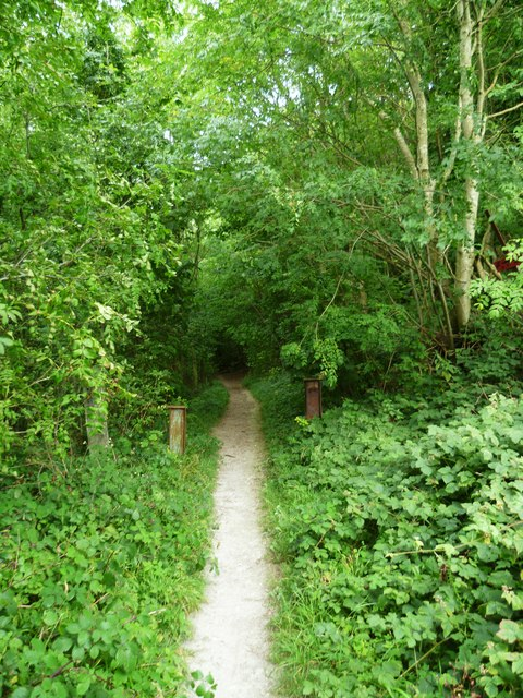 Bridleway from the South Downs Way enters woods