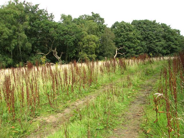 Track through Short Tree Plantation
