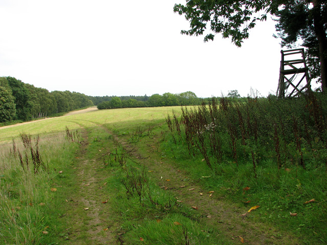Hay meadow south of Old Sovereigns, Castle Rising