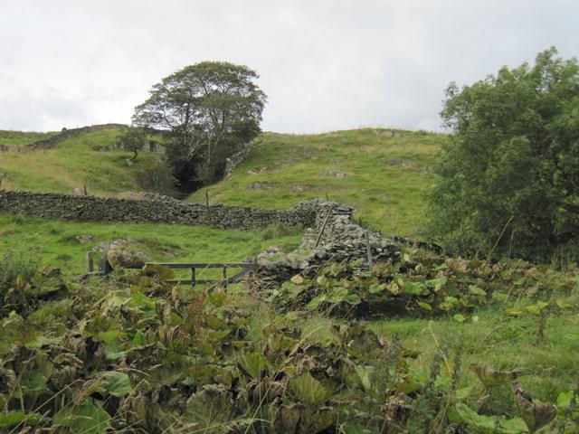 Walls and fellside north of Goat Lane