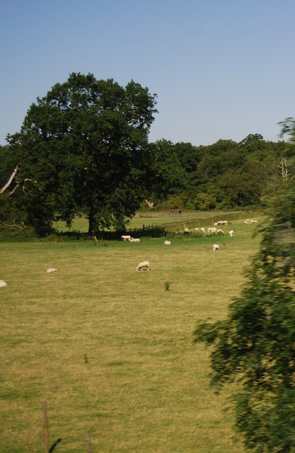 Sheep grazing by the M11