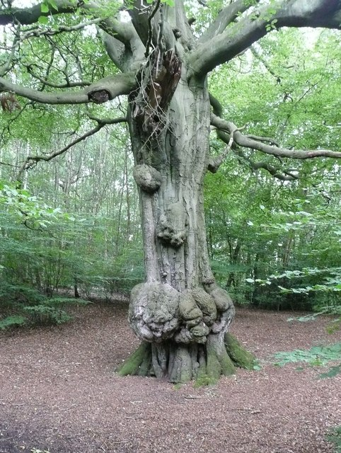 Tree in Hirst Wood, Saltaire