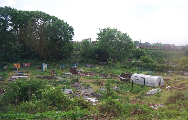 Allotments by the railway line