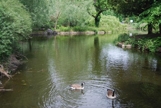 Geese, Crystal Palace Park