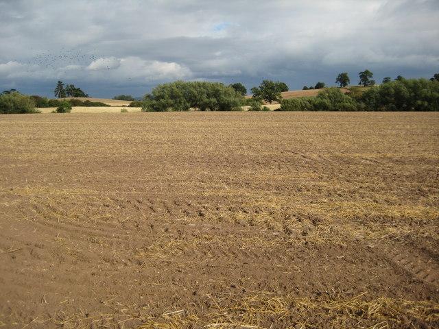 Arable land near Kinnersley