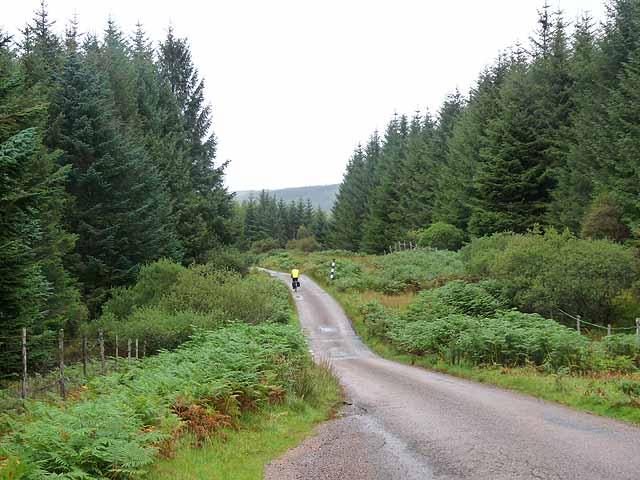 Road through Ardow Woods