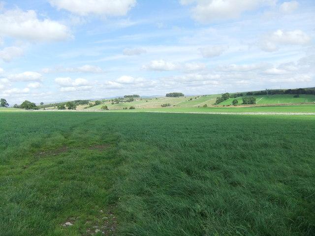 Fields near Shap