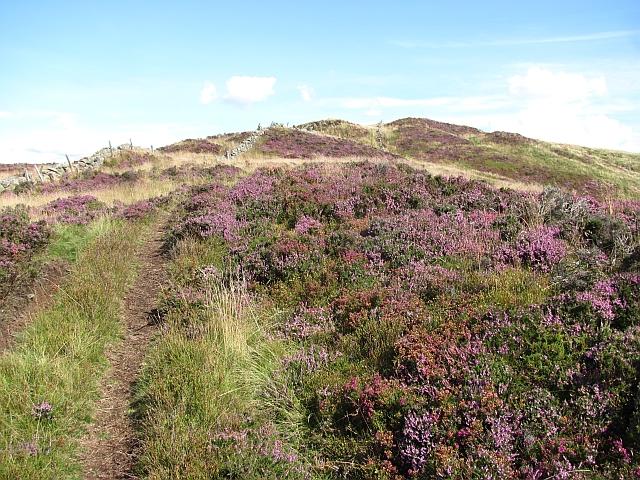 Summit ridge, Benarty Hill