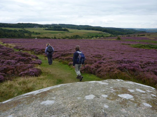 Rock and heather, near Toad's Mouth