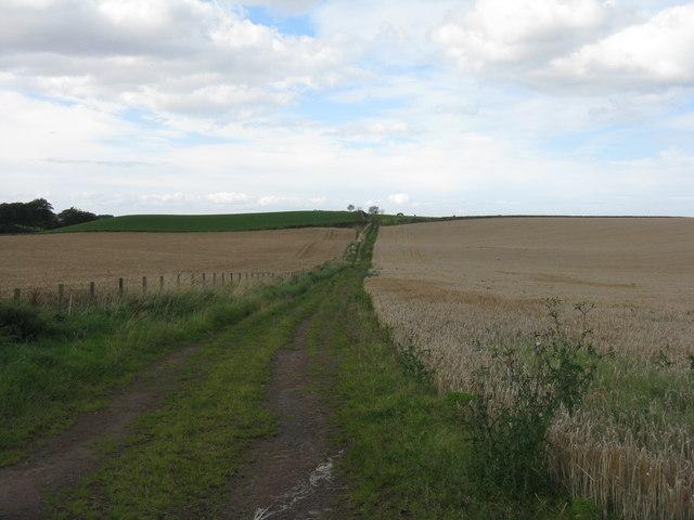 Track between the barley