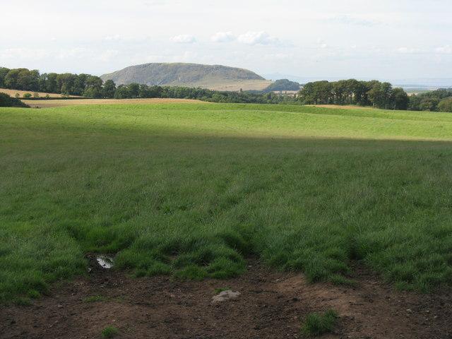 Pasture near Deuchrie