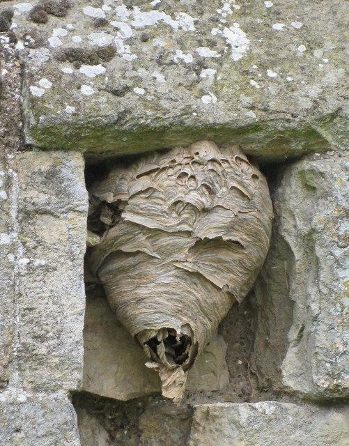 Wasps' nest, Wharram Percy