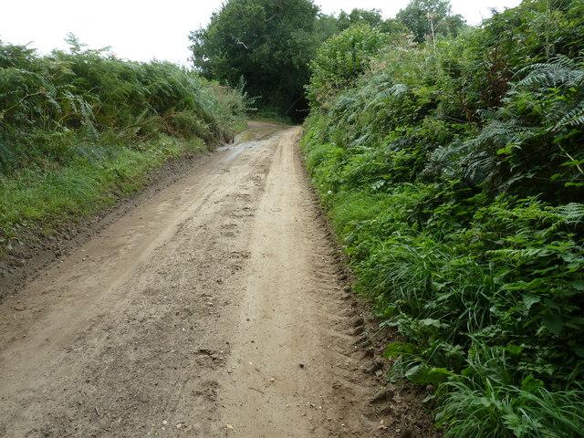 Hammer Lane to the NE of Chithurst