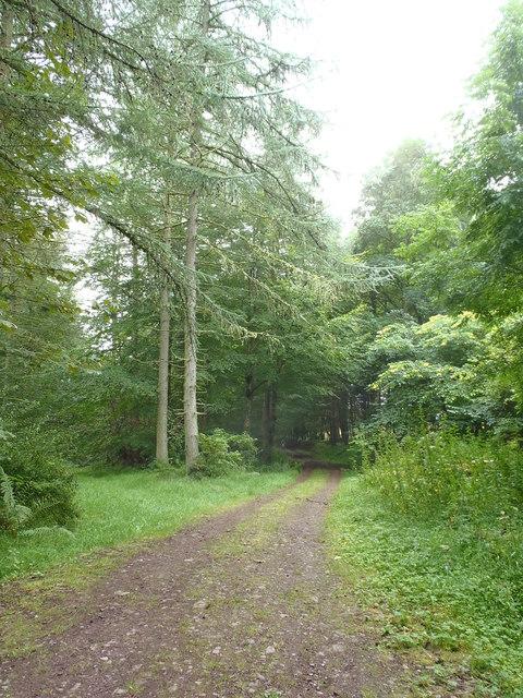 Track within Drumlanrig Woods