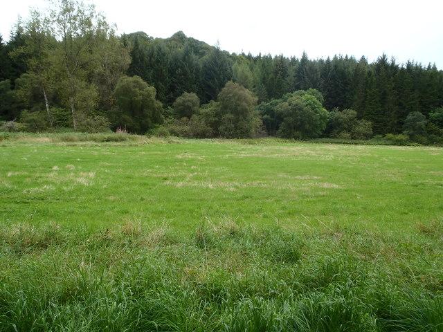 Clearing in Drumlanrig Woods