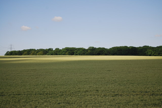 Wheat field near North Hall