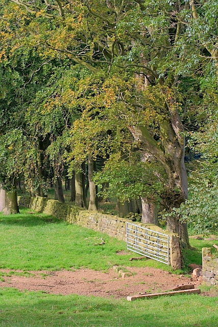 Field Boundary, Newton Farm