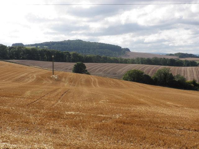 View towards Wallbrook Wood and Aconbury Hill