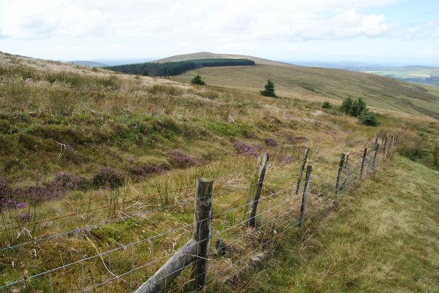 Former forest on Pen Cisty