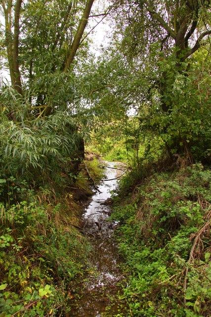 Drainage ditch near Drayton Copse