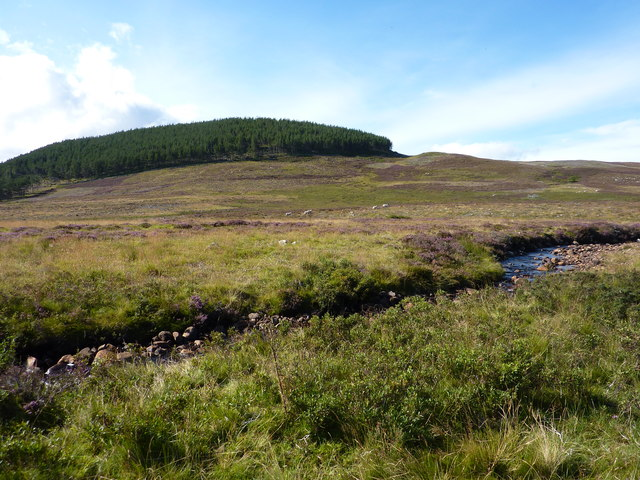 The woodland covering Creag Mhor