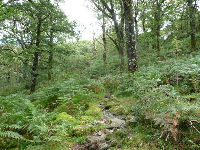 Small woodland path